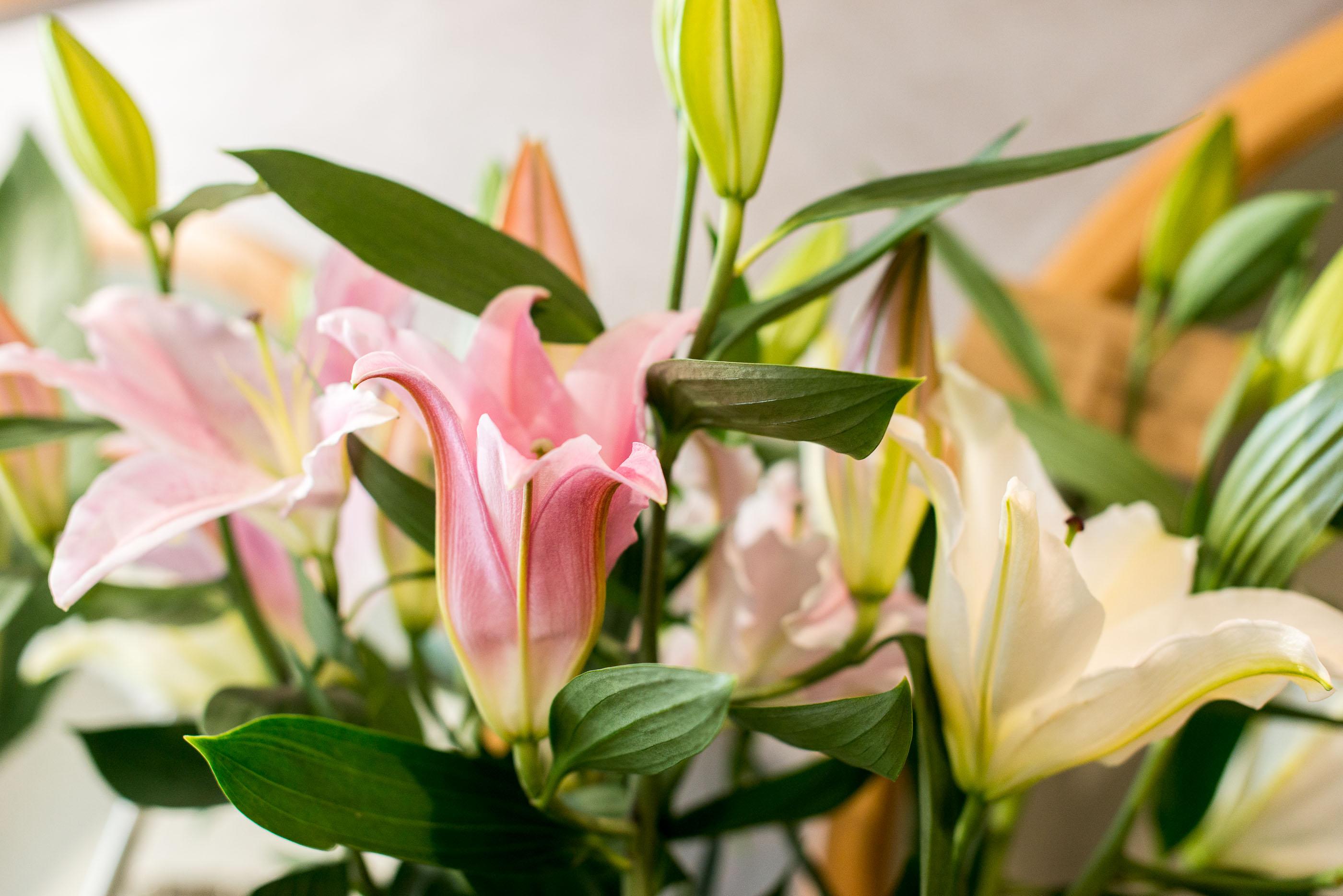 casa-fiori-gianni-43